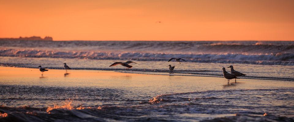 Birds on a New York beach in the morning - Shelter Island, NY
